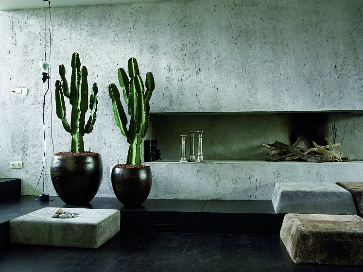 My Tricks for Simply Modern Interior Plants