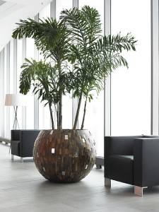 Palm in cylinder