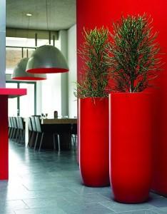 Pencil Cactus in Red Pots
