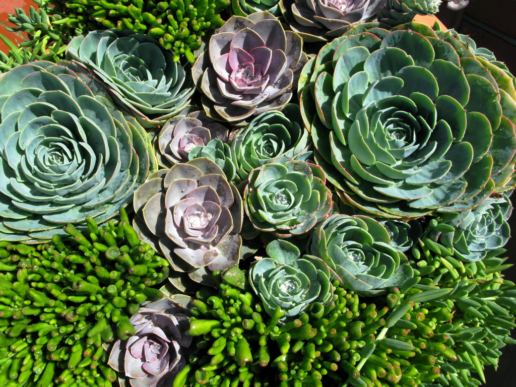 Succulent plants in exterior container