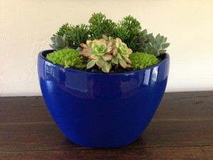 Succulent Color Bowl