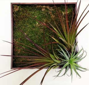 Tillandsia living wall