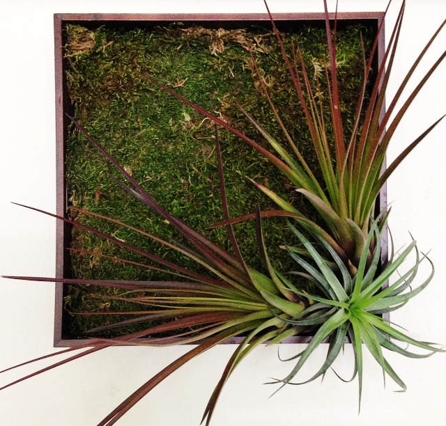 I Used Old Picture Frames To Tillandsia Living Wall