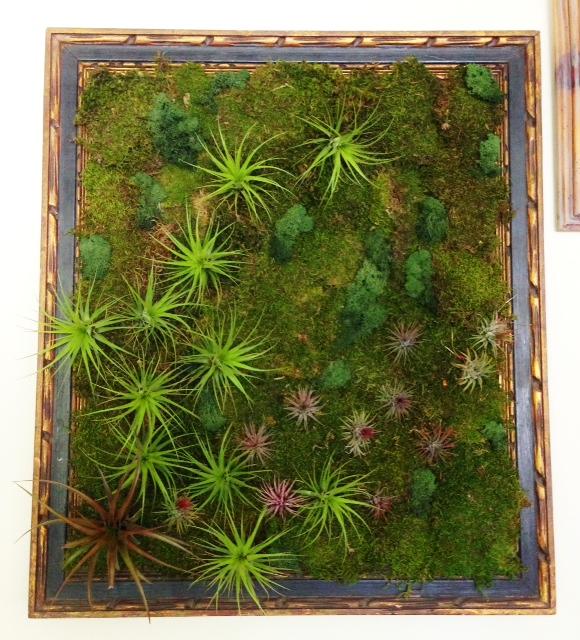 Living Wall Art light-weight tillandsia living wall art – soil-less