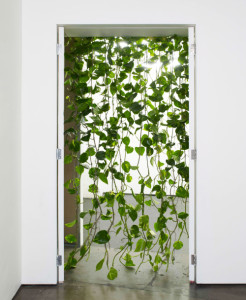 pothos screen