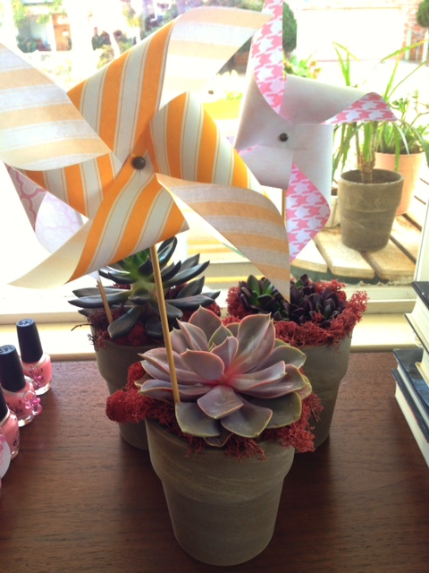pinwheels with succulents for baby shower
